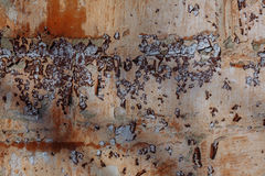 Γκρι και ραγισμένη κόκκινο ζωγραφική στον παλαιό τοίχο ασβεστοκονιάματος Στοκ Φωτογραφίες