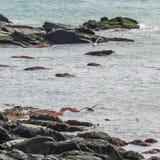 Γλάροι και κορμοράνοι στην ακτή του Ρόουντ Άιλαντ Στοκ Φωτογραφία