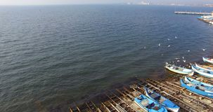 Γλάροι πέρα από τα αλιευτικά σκάφη σε Pomorie, Βουλγαρία φιλμ μικρού μήκους