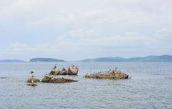 Γλάροι που κάνουν ηλιοθεραπεία στους βράχους Στοκ εικόνα με δικαίωμα ελεύθερης χρήσης