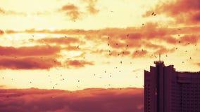 Γλάροι που πετούν πάνω από τα σύννεφα με όμορφο κόκκινο ηλιοβασίλεμα στο βραδυνό λυκόφως φόντο απόθεμα βίντεο