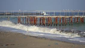 Γλάροι στην αποβάθρα σιδήρου στη θάλασσα φιλμ μικρού μήκους