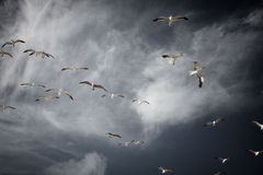 γλάροι Στοκ εικόνα με δικαίωμα ελεύθερης χρήσης