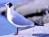 Γλάρος που στέκεται στο φωτεινό άσπρο μουτζουρωμένο backrgroun ήλιων στοκ εικόνες