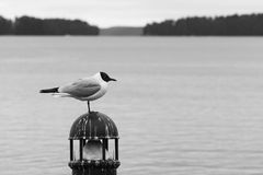 Γλάρος στο λιμάνι Στοκ εικόνες με δικαίωμα ελεύθερης χρήσης