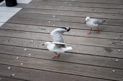 Γλάρος στο λιμάνι στοκ φωτογραφίες με δικαίωμα ελεύθερης χρήσης