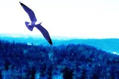 γλάρος Στοκ Φωτογραφίες