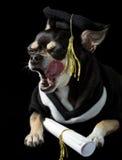 γλείψιμο βαθμολόγησης προσώπου σκυλιών Στοκ εικόνες με δικαίωμα ελεύθερης χρήσης