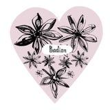 Γλυκάνισο αστεριών ή badian συρμένο χέρι σκίτσο Χαραγμένα καρύκευμα ύφους και αντικείμενο γεύσης Στοκ Εικόνες