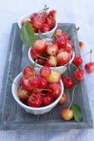 Γλυκά κεράσια σε ένα φλυτζάνι Στοκ φωτογραφία με δικαίωμα ελεύθερης χρήσης
