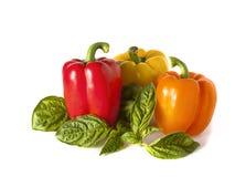 Γλυκά πιπέρια και basilik onwhite backgound στοκ εικόνα με δικαίωμα ελεύθερης χρήσης