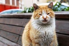 Γλυκιά γάτα Στοκ Φωτογραφία