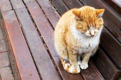 Γλυκιά γάτα Στοκ φωτογραφίες με δικαίωμα ελεύθερης χρήσης
