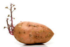 Γλυκιά πατάτα Στοκ φωτογραφίες με δικαίωμα ελεύθερης χρήσης
