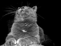 γλυκό γατών Στοκ εικόνα με δικαίωμα ελεύθερης χρήσης