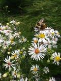 Γλυκό μελισσών Στοκ φωτογραφία με δικαίωμα ελεύθερης χρήσης