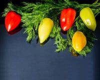 Γλυκό πολύχρωμο πιπέρι με τον άνηθο υπό μορφή κλάδου Στοκ εικόνα με δικαίωμα ελεύθερης χρήσης