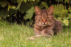 γλυκό πορτρέτου γατακιών στοκ εικόνες