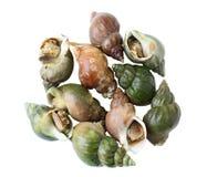 γλυκό σαλιγκαριών Στοκ Εικόνα