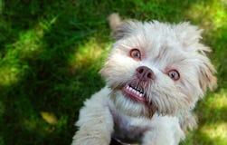 Γλυκό χαριτωμένο σκυλί στην πράσινη χλόη στοκ φωτογραφία με δικαίωμα ελεύθερης χρήσης