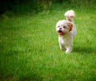 Γλυκό χαριτωμένο σκυλί στην πράσινη χλόη στοκ εικόνα