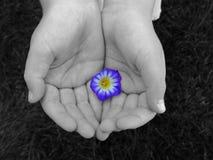 γλυκό χεριών Στοκ φωτογραφία με δικαίωμα ελεύθερης χρήσης