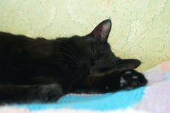 Γλυκό όνειρο μιας μαύρης γάτας στοκ φωτογραφία