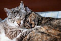 γλυκό ύπνου ζευγών Στοκ εικόνα με δικαίωμα ελεύθερης χρήσης