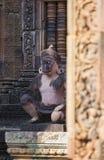 Γλυπτικές Gardians λιονταριών και πιθήκων στο ναό κόκκινου ψαμμίτη Banteay Srei, Καμπότζη Στοκ εικόνες με δικαίωμα ελεύθερης χρήσης