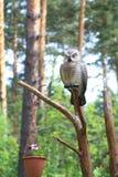 Γλυπτό μιας κουκουβάγιας σε ένα δέντρο - σχέδιο τοπίων και τοπίο Στοκ φωτογραφία με δικαίωμα ελεύθερης χρήσης