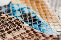 Γνήσια δείγματα χρώματος δέρματος, εξωτική σύσταση Εκλεκτική εστίαση Στοκ εικόνες με δικαίωμα ελεύθερης χρήσης