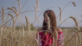 Γοητεία της νέας γυναίκας που απολαμβάνει τη φύση και το φως του ήλιου στον τομέα σίτου στις απίστευτες ζωηρόχρωμες ακτίνες ήλιων απόθεμα βίντεο