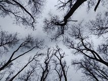 γοητεία του δάσους στοκ φωτογραφίες με δικαίωμα ελεύθερης χρήσης