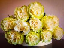 Γοητευτικά άσπρα τριαντάφυλλα με το πράσινο τρόχισμα μακριά! στοκ εικόνα