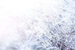 Γοητευτικοί παγωμένοι κλάδοι δέντρων Στοκ Φωτογραφίες