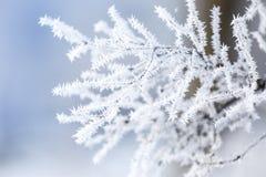 Γοητευτικοί παγωμένοι κλάδοι δέντρων Στοκ Εικόνες