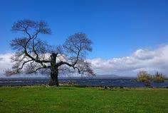 Γοητευτικό δέντρο Στοκ φωτογραφίες με δικαίωμα ελεύθερης χρήσης
