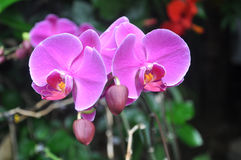 Γοητευτικό λουλούδι Στοκ Εικόνες