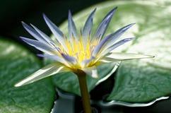Γοητευτικό λουλούδι Στοκ φωτογραφία με δικαίωμα ελεύθερης χρήσης