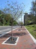 Γοητευτικό πεζοδρόμιο με τα μικρά δέντρα στον τρόπο στοκ εικόνες με δικαίωμα ελεύθερης χρήσης