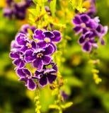 Γοητευτικό χρώμα και λουλούδι Στοκ Εικόνες