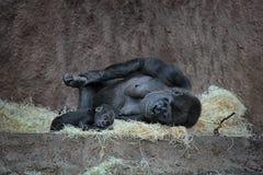 Γορίλλας μητέρων με το μωρό στοκ εικόνα με δικαίωμα ελεύθερης χρήσης