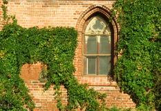 γοτθικό παράθυρο κισσών στοκ φωτογραφίες με δικαίωμα ελεύθερης χρήσης