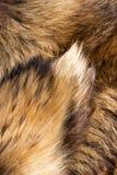 Γούνα αλεπούδων Στοκ φωτογραφία με δικαίωμα ελεύθερης χρήσης