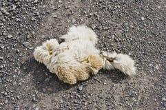 Γούνα αλκών ή cariboo Στοκ Εικόνες
