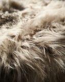 Γούνα στοκ φωτογραφία με δικαίωμα ελεύθερης χρήσης