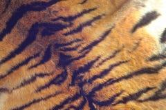 Γούνα μιας τίγρης στοκ φωτογραφίες