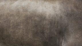 Γούνα της αγελάδας Appenzell Στοκ εικόνες με δικαίωμα ελεύθερης χρήσης