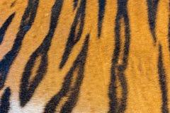 Γούνα τιγρών, δέρμα τιγρών Στοκ φωτογραφία με δικαίωμα ελεύθερης χρήσης