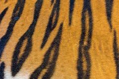 Γούνα τιγρών, δέρμα τιγρών Στοκ εικόνα με δικαίωμα ελεύθερης χρήσης